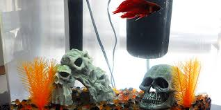 Halloween Themed Betta Tank Inspiration