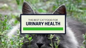 the best cat food for urinary health our top picks