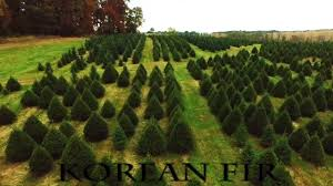 davidson christmas tree farm youtube