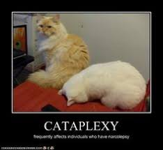Narcolepsy Meme - excessive daytime sleepiness quiz living with cataplexy and