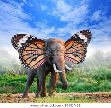 portrait elephant butterfly wings forest stock photo 265517489