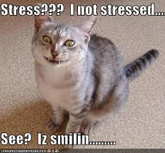Stressed Out Memes - caturday 11 2 2017 don t cry ovar spilld milk dai the daily