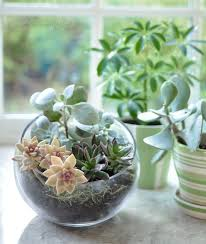 25 best terrarium bowls ideas on pinterest dish garden plants