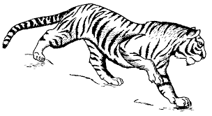tiger black and white free black and white tiger clipart 1 page of