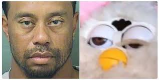 Eye Of The Tiger Meme - furby comparison tiger woods mugshot know your meme