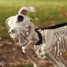 Skeleton Dog Decoration Keep Your Pet Safe U0026 By Your Side With A Strong Durable