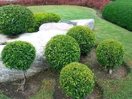 Garden Shrubs Ideas Garden Shrubs Hydraz Club