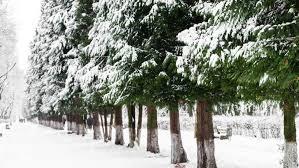5 windbreak trees that will you away