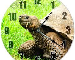 tortoise home decor tortoise home decor etsy