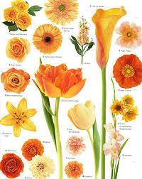 best 25 orange flowers ideas on pinterest flowers beautiful