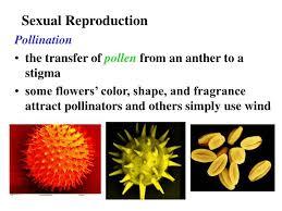 ppt angiosperm plant reproduction chap 28 powerpoint