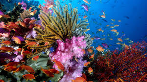 coral reef hd wallpapers hd wallpapers inn reefs pinterest