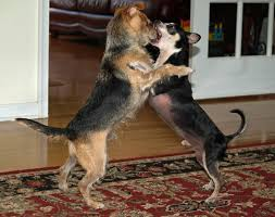 dog behavior wikipedia