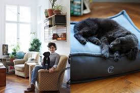 Covered Dog Bed Shopping For Covered Dog Bed Dog Bed Design Ideas
