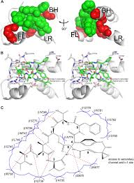 transcription inhibition by the depsipeptide antibiotic salinamide