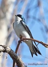 30 best backyard birds in delaware images on the birds