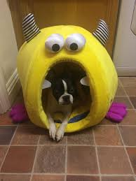 Igloo Dog Bed Boston Terrier Named Nacho Digs Her New Crazy Dog Bed Photo