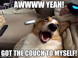 henry the corgi dog latest memes imgflip