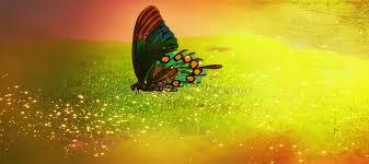 glitter wallpaper with butterflies free images nature sunlight leaf flower green reflection