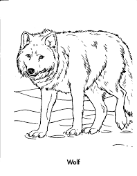 coloring book coloring sea wolf chainimage
