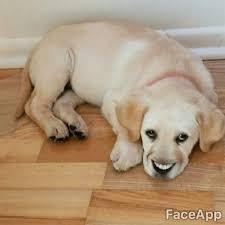 Smiling Dog Meme - smiling dog smiling dogs meme and memes