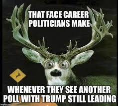 Deer Meme - deer in the headlights meme generator imgflip