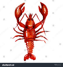 watercolor lobster simple painting sketch vector stock vector