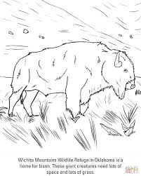 buffalo coloring pages free coloring pages