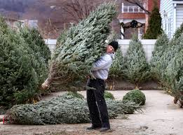 christmas tree farms report banner year local lacrossetribune com