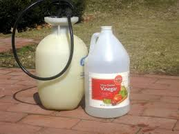 How To Remove Weeds From Patio Weeds In Paths Use Vinegar Not Roundup