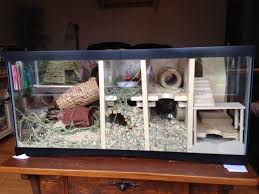 best 25 turtle cage ideas on pinterest cages for rabbits