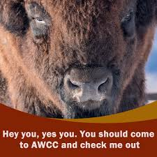 Alaska wildlife images Home awcc jpg