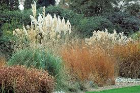 garden design garden design with grow ornamental grasses with home