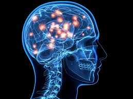 light up your brain your brain is tricking you into eating sugar and buying shoes