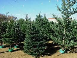 choosing a tree garden org