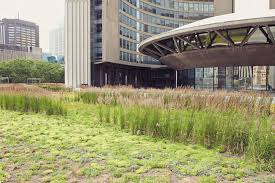 city green prix the best green roofs in toronto