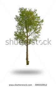 a small tree stock images royalty free images vectors