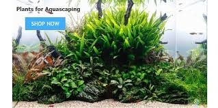 Aquascaping Plants Aquarium Plants From Aquarium Gardens Uk Live Aquatic Tropical