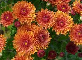 plants for your fall garden total mortgage blog