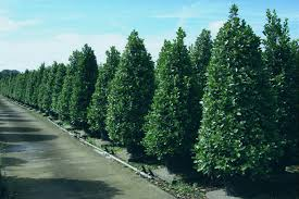 outdoor artificial plants trees outdoor artificial plants