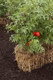 31 best gardening images on pinterest end of summer fall garden