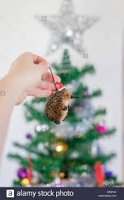 australian christmas close up of hand holding australian christmas decoration in front