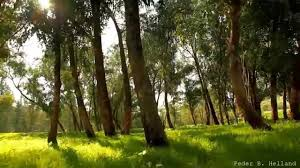 widescreen beautiful nature video relaxing music echoes of the