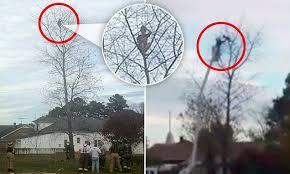 six year boy climbs 50 up a tree