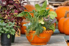 fall is prime time for container grown herbs vegetables