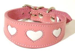 afghan hound collars uk heart dog collars for whippet greyhound lurcher