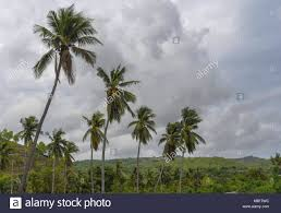 Trees Worldwide Coconut Trees At The Atauro Dec 22 2017 Usage