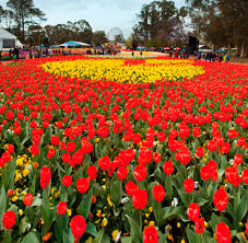 canberra native plants floriade springs to life in canberra travel with michelle