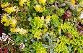 how to make a succulent terrarium diy projects craft ideas u0026 how
