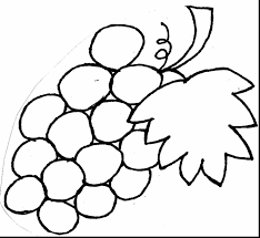 wonderful grapes coloring pages printable with grapes coloring